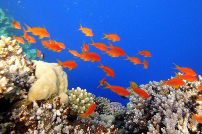 Immersioni Sharm El Sheikh