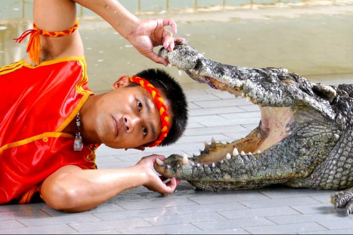 Crocodile and Snake Show Sharm El Sheikh