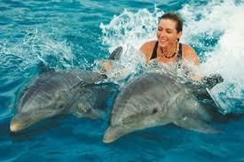Плавание с дельфинами в Шарм-эль-Шейх
