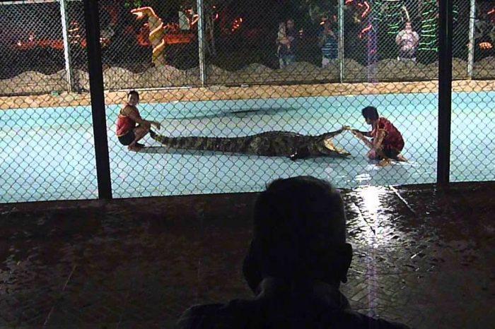 Lo spettacolo die crocodilo Sharm el Sheikh