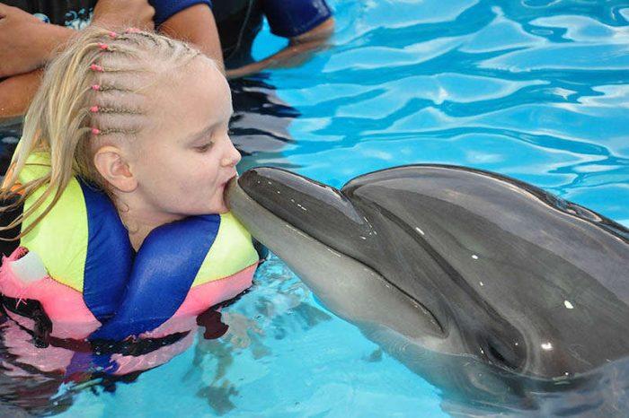 Nuotare con i Delfini a Sharm el Sheikh