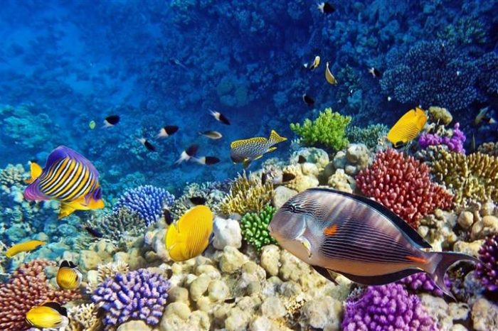 6×1 Excursion in 3 pools in Dahab, Snorkeling, Safari